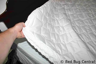 Bjs Memory Foam Mattress Topper Bed Bug Mattress