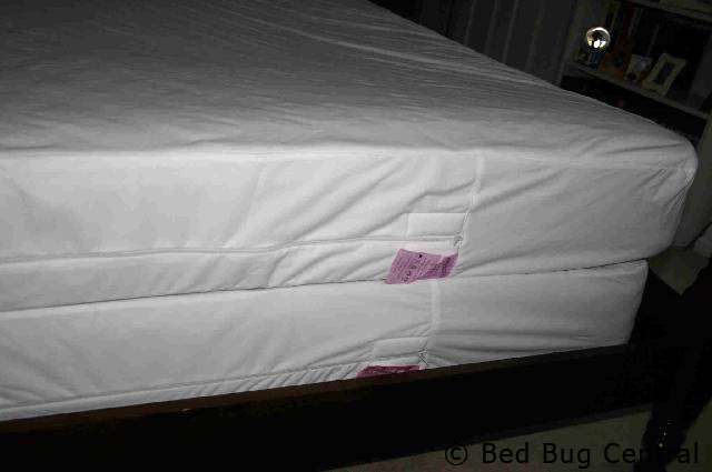 Bed Bugs 101 I Have Bed Bugs Now What Bedbug Central